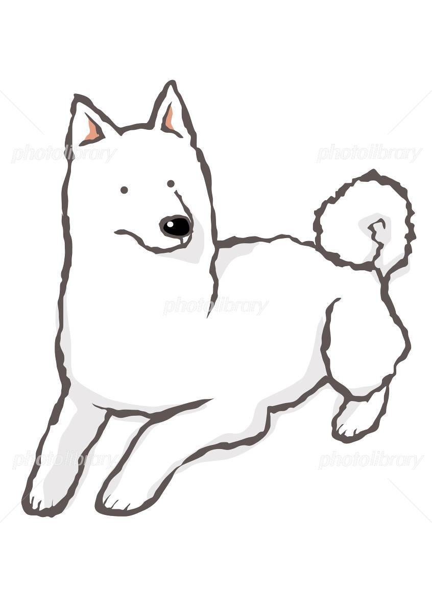伏せをする白日本犬 イラスト素材 799059 フォトライブラリー