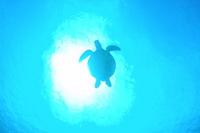 Sea turtle Stock photo [784769] Turtle