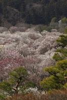 View from the Plum Garden landscape Kairakuen Stock photo [785899] Plum