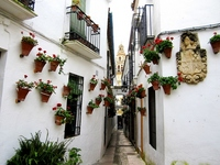 Trail of Cordoba flower Stock photo [788125] Cordoba
