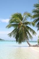 Tree in Tahiti palm beach Stock photo [788224] Sea