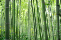 Bamboo forest Stock photo [789248] Bamboo