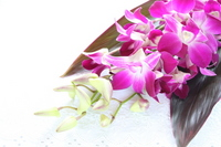Den fire Stock photo [792655] Orchid