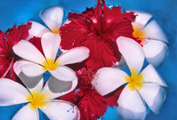 Tropical image Stock photo [792751] Hibiscus
