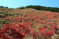 Ohira azalea Mt. Stock photo [794239] Mie