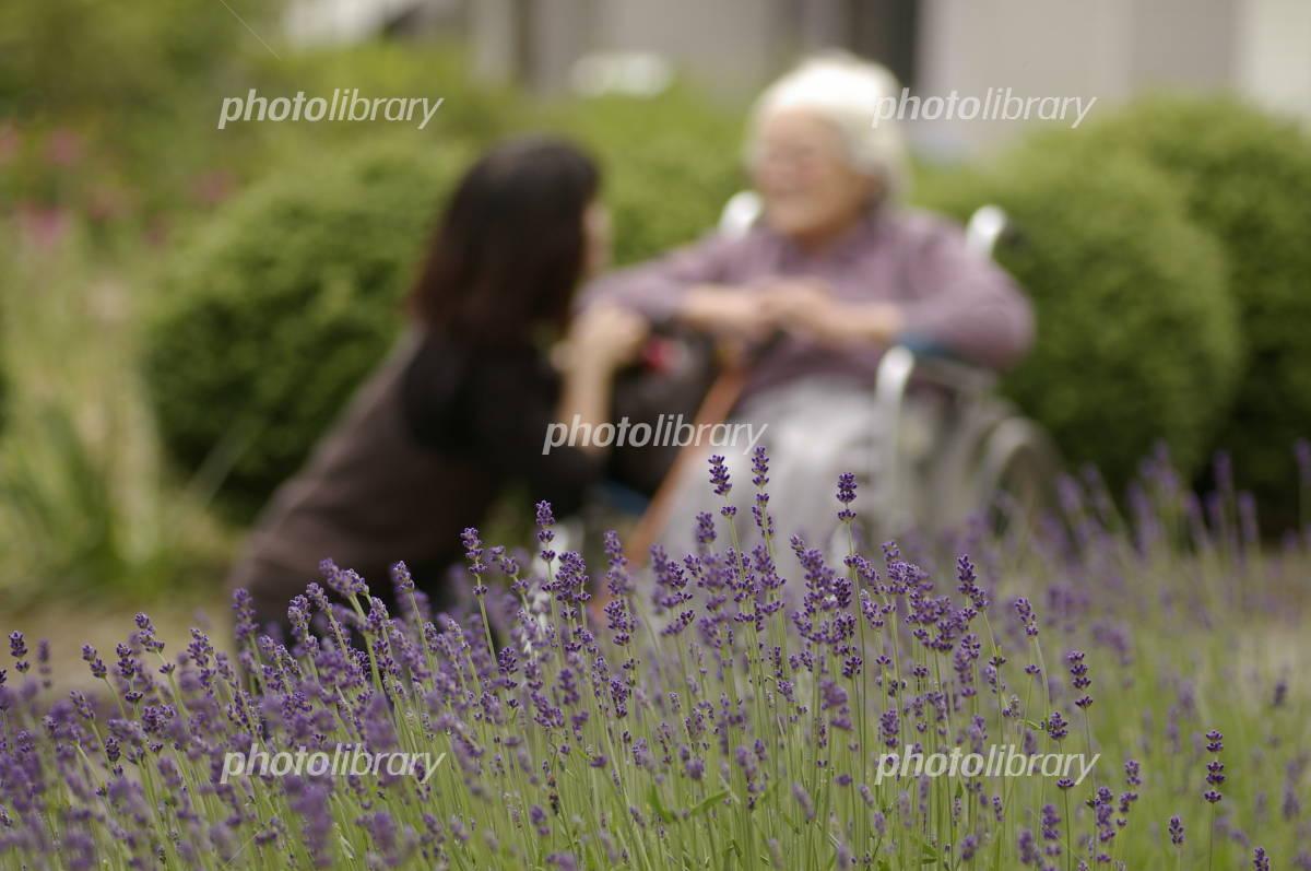 In lavender blooming garden Photo