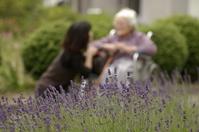 In lavender blooming garden Stock photo [872239] Zinnia