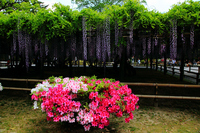 Fuji and azalea Stock photo [873030] Rattan