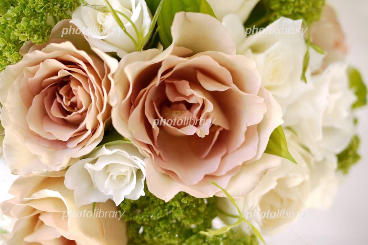 ベージュの薔薇 写真素材 無料 フォトライブラリー Photolibrary