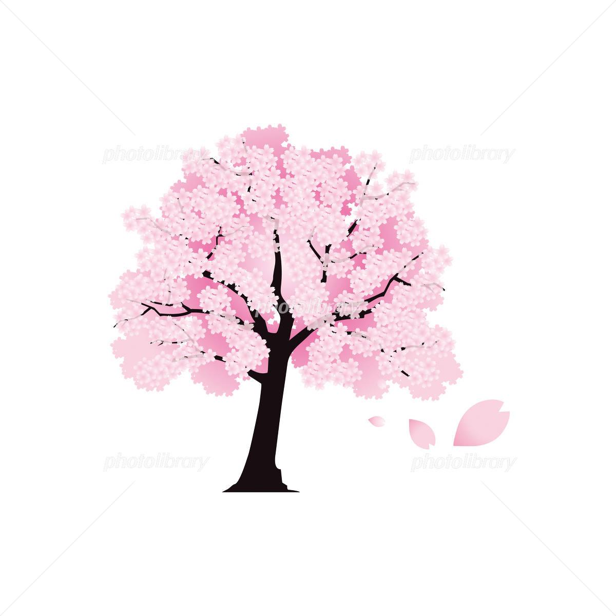 桜の木の絵 イラスト素材 953935 フォトライブラリー Photolibrary