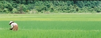 Vietnam countryside Stock photo [948912] Vietnam