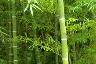 Bamboo Stock photo [949537] Bamboo