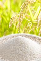 Rice Stock photo [953541] Rice