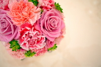 Flowers of bright carnation and pink gradient Stock photo [1058333] Carnation