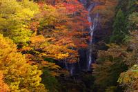 Shirataki of autumn leaves Stock photo [1059799] Miyazaki