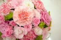 Pale pink kernel tion ball Stock photo [1062278] Carnation