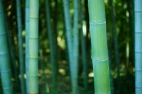 Bamboo forest Stock photo [1064192] Bamboo