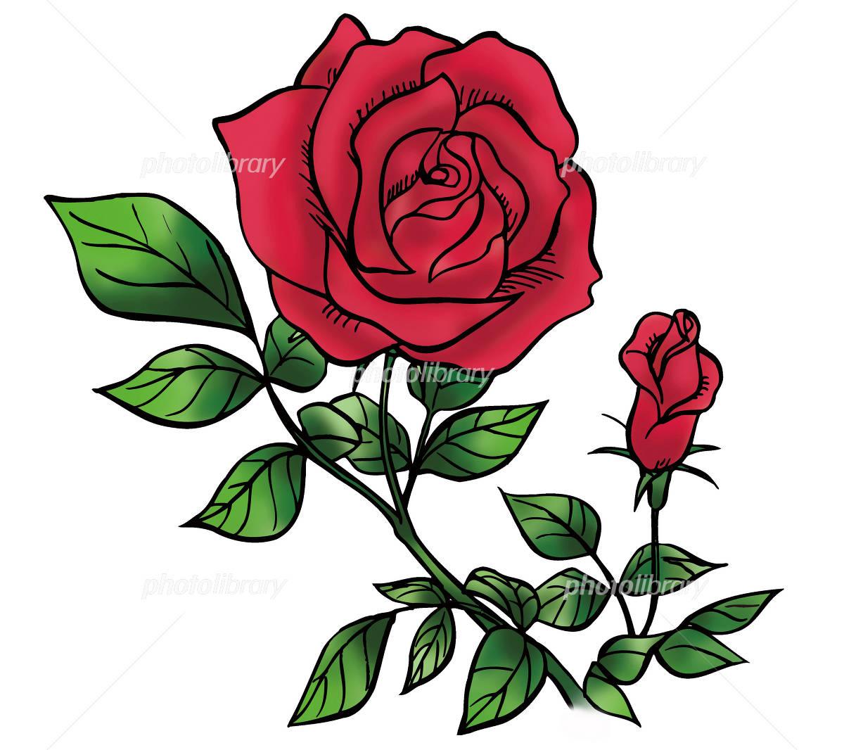 薔薇の花 イラスト素材 1170485 フォトライブラリー Photolibrary