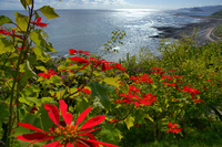 Nichinan coast of Poisechia Stock photo [1173235] The