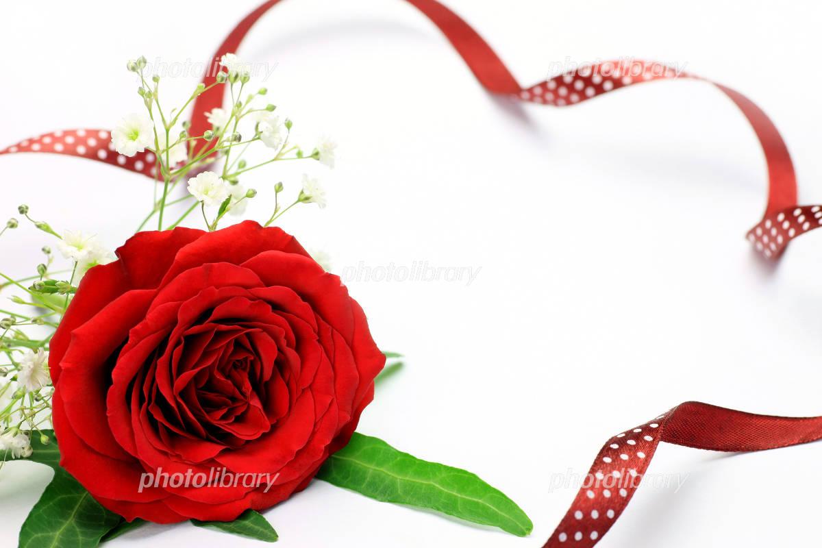 薔薇とリボン 写真素材 フォトライブラリー Photolibrary