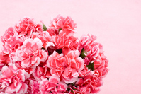 Pink carnation bouquet Stock photo [1264019] Carnation