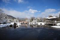 Hanging snow of Murasaki Shikibu park Stock photo [1265329] Hanging