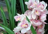 Simpijoum Stock photo [1265835] Orchid