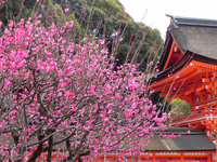 Hongmei and Shimogamo tower gate Stock photo [1266722] Kyoto