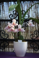 Orchid Stock photo [1277631] Orchid
