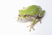 Frog Stock photo [1278336] Frog