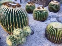 Cactus Stock photo [2315] Cactus
