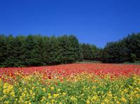 Flower garden Stock photo [2404] Flower
