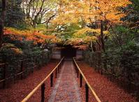 Autumn in Kyoto Stock photo [2502] Kyoto