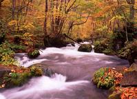 The fall of the Oirase stream Stock photo [2758] Oirase