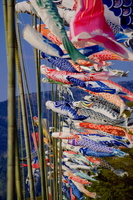 Carp streamer Stock photo [1354148] Carp