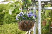 Hanging basket Stock photo [1359420] Hanging