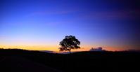 Tree of dawn Stock photo [1544970] Kumamoto