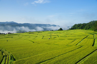 Mountainous countryside - early autumn - Stock photo [1551337] Rice