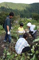 Family to prepare for Satoyama experience harvest Stock photo [1552573] Family