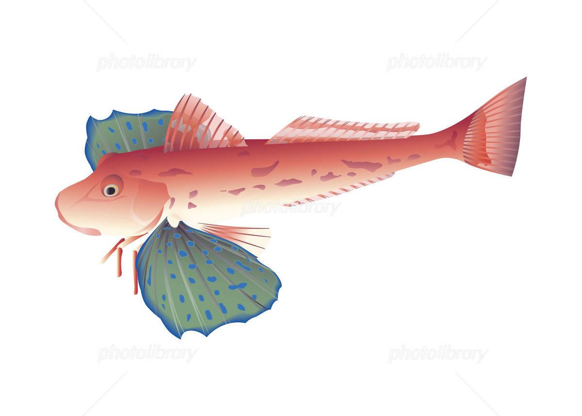 「魚イラスト画像 ホウボウ」の画像検索結果