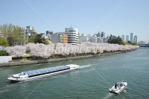 Spring Okawa Photo