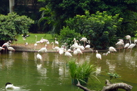 Flamingo that are in the pond of Kowloon Park Stock photo [1652417] China