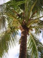 Palm tree Stock photo [1653143] Palm