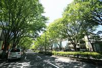 Road Stock photo [1653860] Omotesando