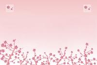 Plum: plum blossom is full February CG illustrations Plum