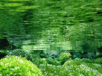 Water Ritsurin Park-blow Stock photo [1743638] Ritsurin