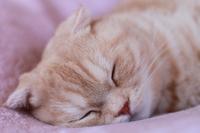 The cat is sleeping Stock photo [1747289] CAT