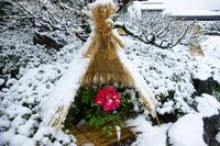 Winter Peony Stock photo [1827261] Winter