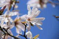 Fist of the flower Stock photo [1829582] Kobushi