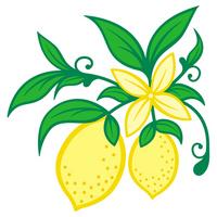 Lemon [1941699] Lemon
